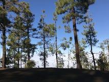 Forest Above The Clouds Foto de archivo