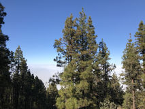 Forest Above The Clouds Fotografía de archivo