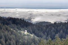 Forest Above The Clouds Fotos de archivo