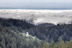 Forest Above The Clouds Stock Photos
