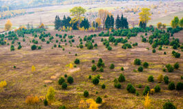 Forest from above. Countryside from above. Lithuanian fields and young pine forest Royalty Free Stock Photography