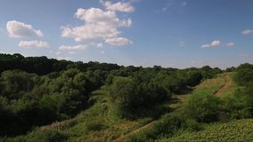 Forest from above. Drone aerial footage stock video footage