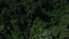Forest from above. Drone aerial footage stock footage