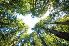 The Forest Above Stock Image