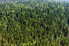 Forest from above Stock Images