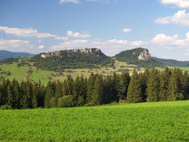 Forest above Vysny Kubin, Slovakia Royalty Free Stock Photos