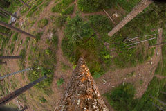 Forest from above Royalty Free Stock Image