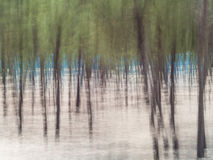 Forest abstract background Stock Photos