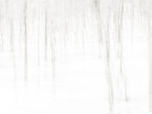 Forest abstract background Royalty Free Stock Images