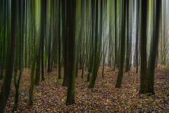 Forest. Abstract background. Stock Photos