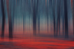 Forest abstract colorful stock photography