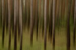Forest abstract Stock Photos