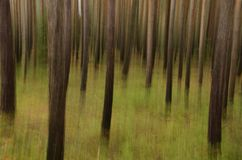 Forest abstract Stock Photography