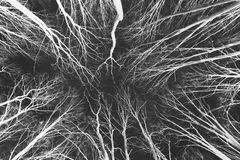 Forest abstract - invert black&white stock image