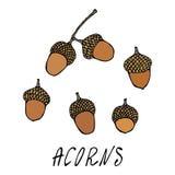 Forest Acorns, graines de chêne Automne ou collection de récolte d'automne Illustration de haute qualité tirée par la main réalis Photo stock