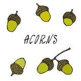 Forest Acorns vert, graines de chêne Automne ou collection de récolte d'automne Illustration de haute qualité tirée par la main r Photo libre de droits