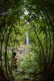 Forest Adventure en bambou, Fisheye Image libre de droits
