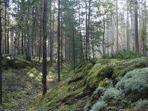 Forest. Adventure Outdoorlife Wild Wildlife Outdoor Hike Hiking Camping Wood Moss Reindeer moss Stock Photos