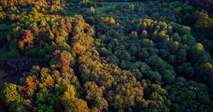 Forest aerial in spring Stock Images