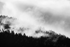 Forest afrer rain. Dark tree and light clouds of vaporizing water Stock Image