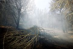 Forest After Fire Stock Photo