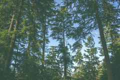 Forest against blue skies Royalty Free Stock Photo