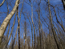 Forest against blue sky Stock Photo