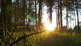 Beautiful Nature of the Forest at Sunset stock video footage