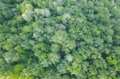 Forest from the air stock images
