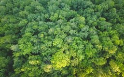 Forest from the air royalty free stock images