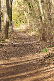 Forest air. Forest path in the sunlight with birds Stock Photo