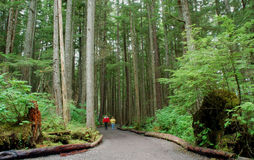 Forest in alaska. Shot from hoonah,icy strait alaska.beach trail Royalty Free Stock Photo