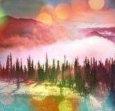 Forest on Alaska Stock Images