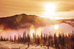 Forest on Alaska Stock Photography