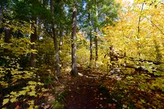Forest in Algonquin Park, Canada Stock Photos