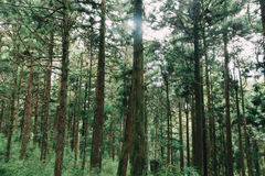 Forest in Alishan taiwan,taichung stock photography