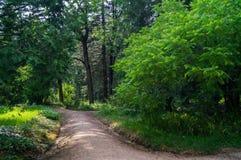Forest Alley Images libres de droits