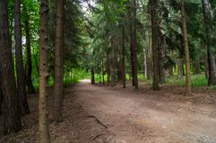 Forest Alley Fotografia de Stock Royalty Free