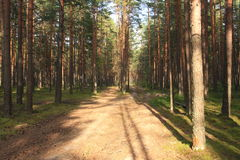 Forest Alley Royaltyfri Bild