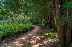 Forest alley Royalty Free Stock Image