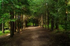 Forest alley Stock Image