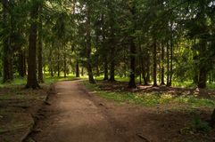 Forest alley Royalty Free Stock Images