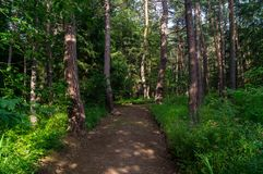 Forest alley Royalty Free Stock Photos