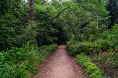 Forest alley Royalty Free Stock Photo