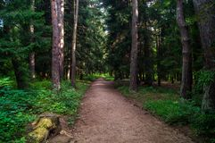 Forest alley Royalty Free Stock Photography