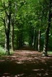 Forest in Almere, The Netherlands. The photo is taken in the area of `Bos der Onverzettelijken`, `Hanny Schaftpark` and `Leegwaterplas stock images