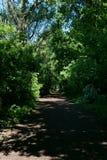 Forest in Almere, The Netherlands. The photo is taken in the area of `Bos der Onverzettelijken`, `Hanny Schaftpark` and `Leegwaterplas royalty free stock photo