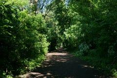Forest in Almere, The Netherlands. The photo is taken in the area of `Bos der Onverzettelijken`, `Hanny Schaftpark` and `Leegwaterplas stock photography