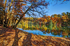 Forest along Lake in the autumn, HDR image Stock Image
