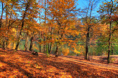 Forest along Lake in the autumn, HDR image Royalty Free Stock Images